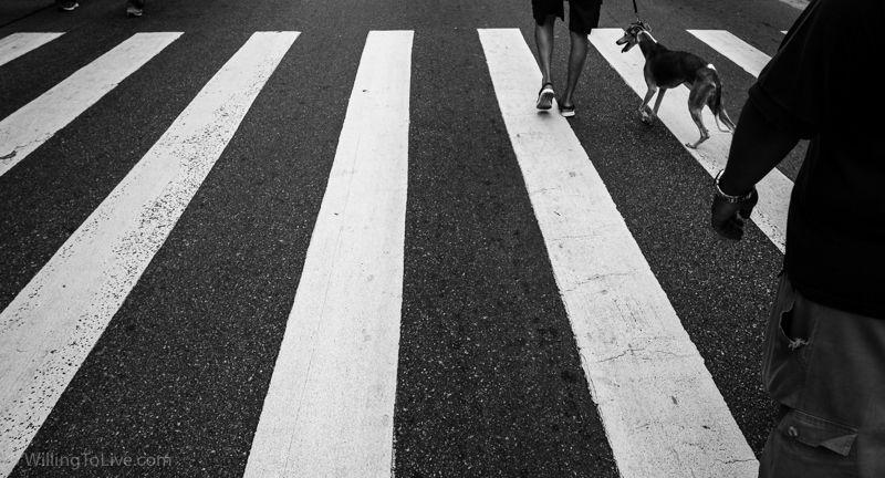 """Ando achando interessante fotos com elementos pintados no asfalto. No passeio do <a href=""""https://www.willingtolive.com/br/passeio-fotografico-minhocao-sao-paulo-click-a-pe#perigosa"""" title=""""Passeio fotográfico no Minhocão em São Paulo"""" target=""""_blank"""">Minhocão</a> também teve uma. Estou testando...   ISO 100; 27mm equiv.; f/5,6; 1/1000s"""