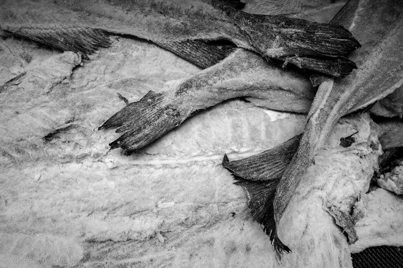 Fish and its texture, shape, and arrangement... | ISO 100; 29mm equiv.; f/5,6; 1/40s