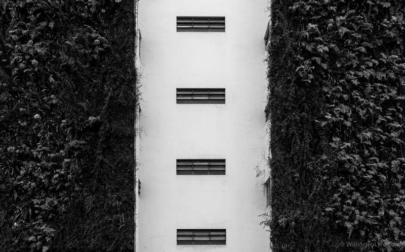 Contrast. Black and white. Nature and building. | 38mm equiv.; f8; 1/160; ISO 100